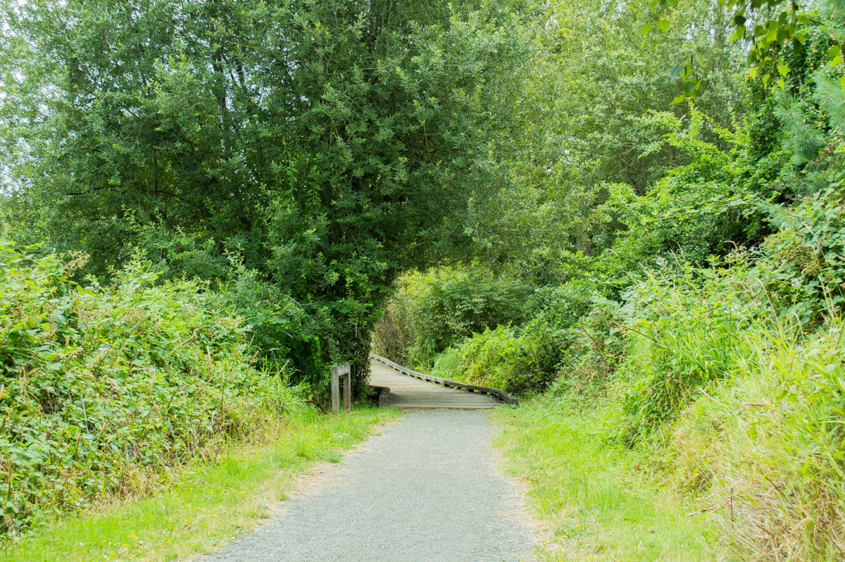 Mercer Slough Nature Park Photos